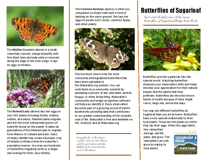 Butterflies at Sugarloaf Ridge State Park